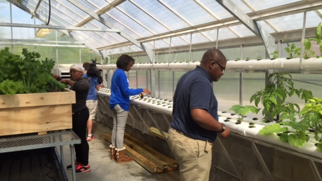 Mays Greenhouse